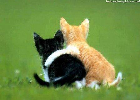 x-kitten-best-friends