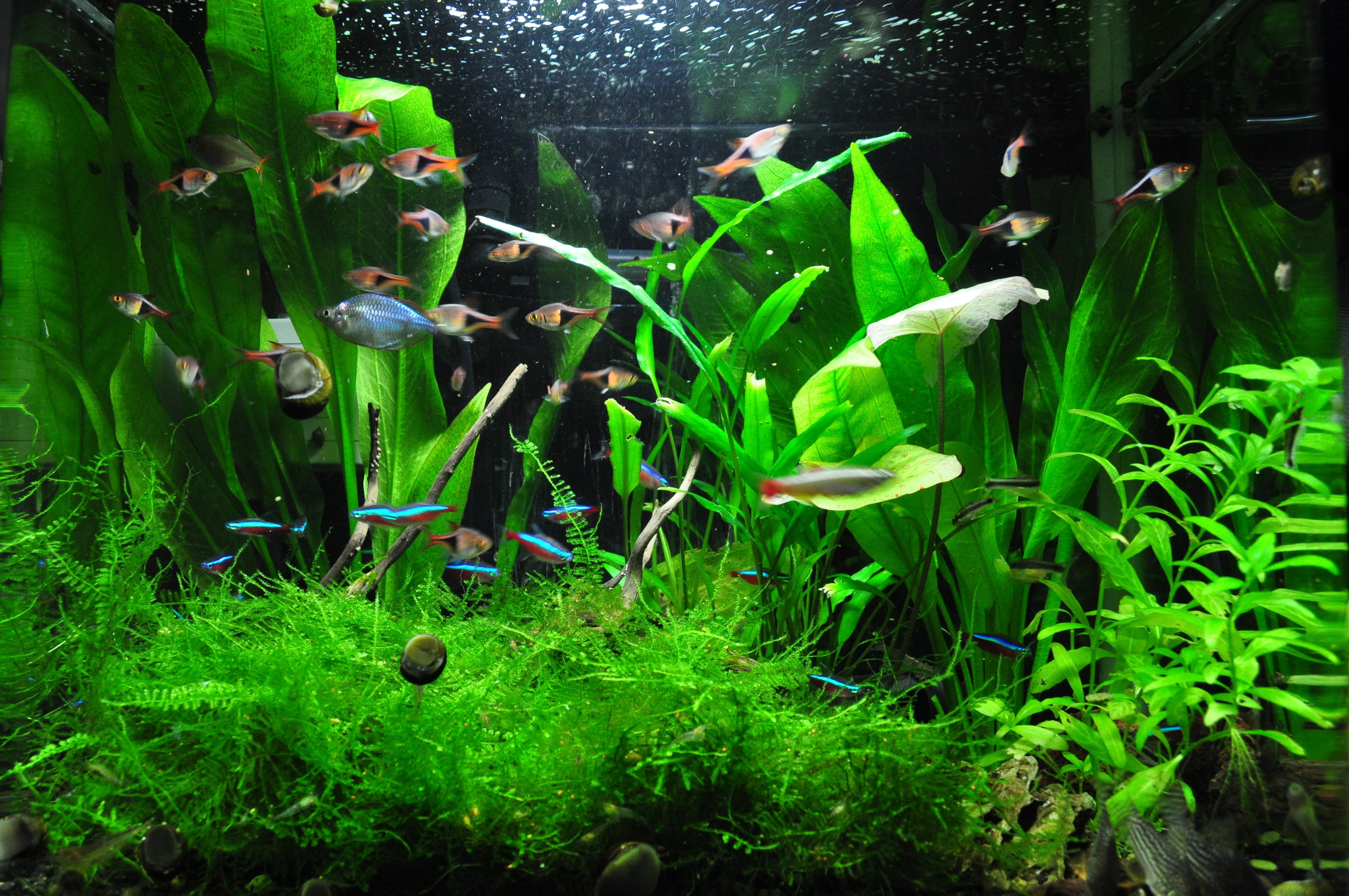 熱帯魚水草水槽 とりあえずトリミング my life my hobby