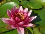 Montjuic-flower