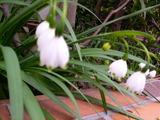 春の声 043