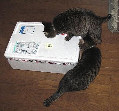この箱にゃあに?
