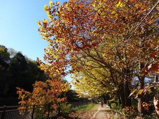 昭和記念公園14