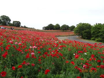 昭和記念公園09