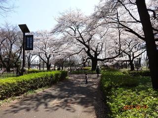 小金井公園03
