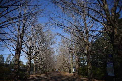 昭和記念公園1601