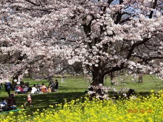 小金井公園05