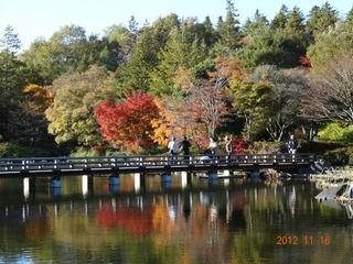 昭和記念公園19
