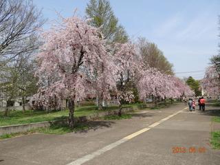 小金井公園02