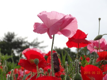 昭和記念公園08