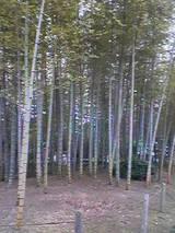 別府公園の竹林