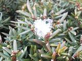 木の枝に落ちた雪の束