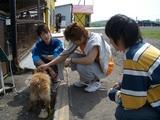 遠足学生と犬