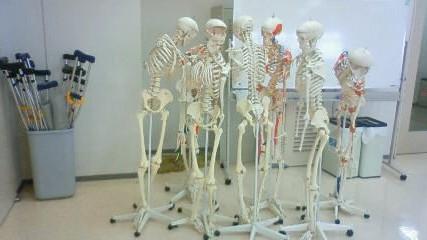 骨模型たち