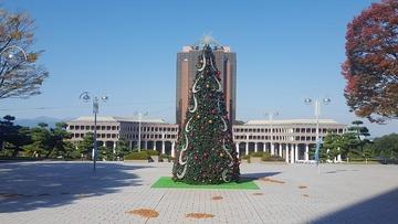 クリスマスツリー完成(昼)