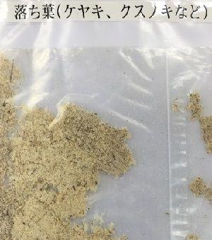 落ち葉の紙