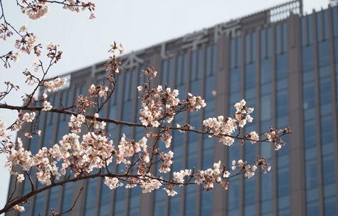 日本工学院専門学校 桜 サクラ