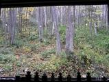 森の時計内部4