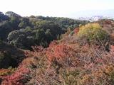 清水の紅葉と京都市内