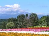 花畑と旭岳連峰2013.7.24