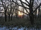 冬の木洩れ日