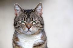 猫が『嫌いな人だけ』にする3つの行動!関係改善のためにできることとは?