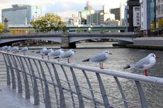 難波橋 鳥