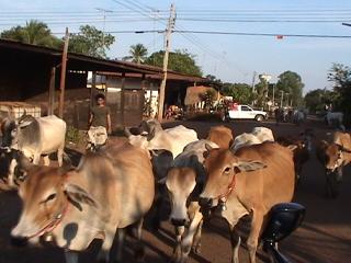 通勤渋滞牛