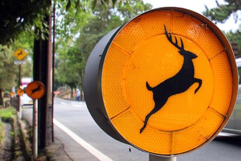 鹿注意標識
