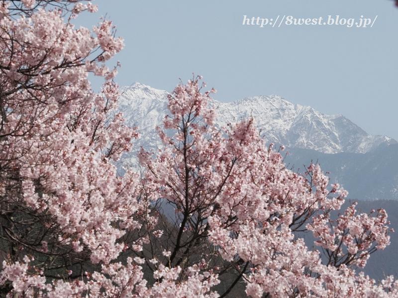 桜と仙丈ヶ岳