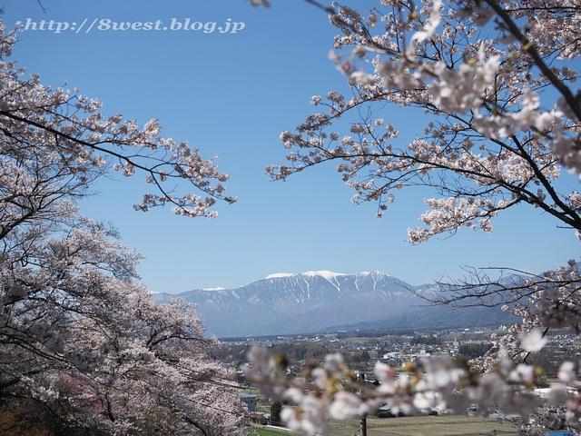 無量寺の桜01