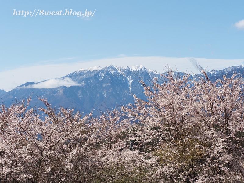 桜と鳳凰三山