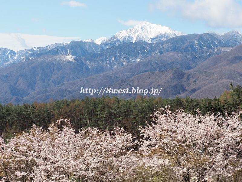 桜と甲斐駒2