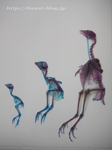 透明標本09