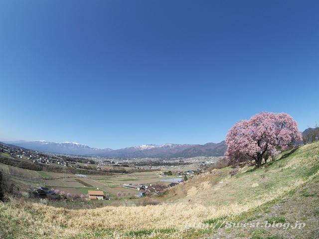 上ノ平の桜22jpg