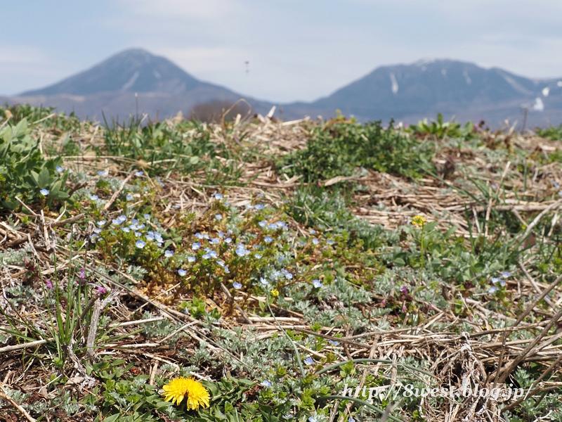 春の花と蓼科北横