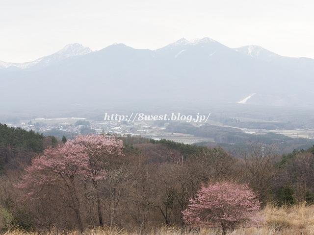 八ヶ岳と桜2