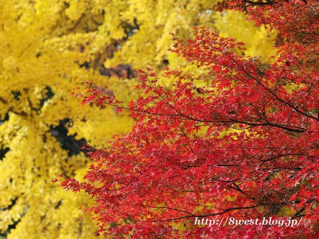 黄紅葉04