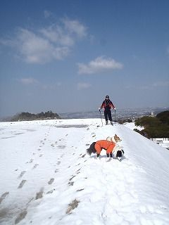 雪のさくら坂 161