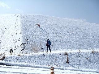 雪のさくら坂 177