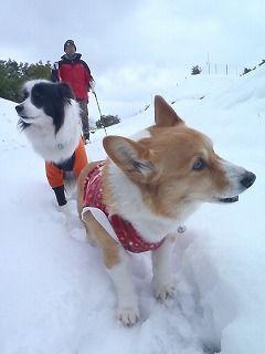 雪のさくら坂 099