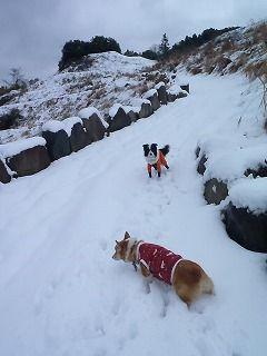 雪のさくら坂 004