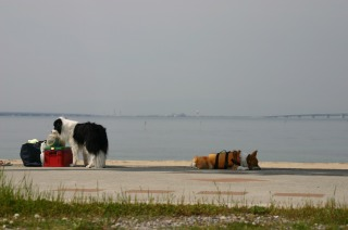 樽井サザンビーチ 291