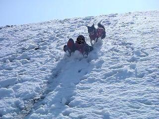 雪のさくら坂 286