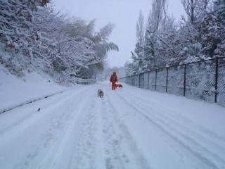 雪のさくら坂 116