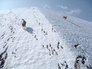 雪のさくら坂 185