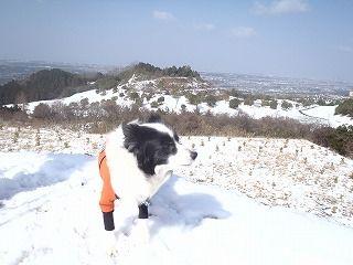 雪のさくら坂 156