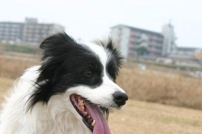 石川散歩 003
