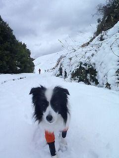 雪のさくら坂 093