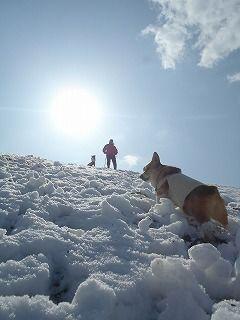 雪のさくら坂 208