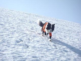 雪のさくら坂 178